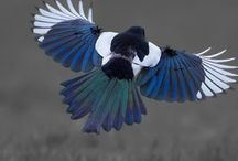 Inkspiration - Magpie / Magpie tattoo for my mom. Still not 100% sure on placement - may be able to incorporate into my right sleeve, but not sure.