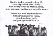 Living the dream *show cattle*