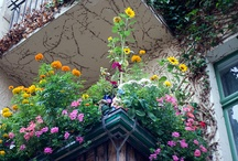 terrace / by Nancy Rotary
