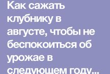 ВСЕ о КЛУБНИКЕ