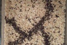 Ant Man Birthday