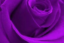 Color me Purple / Purple and violet represent the future, the imagination and dreams, while spiritually calming the emotions. They inspire and enhance psychic ability and spiritual enlightenment, while, at the same time, keeping us grounded.
