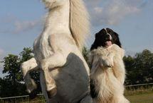 Koňoš
