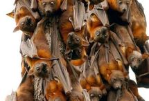 Bats Galore! / by Donna Thomas