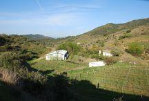 Mas de Masos - Vinya / Les vinyes que cuidem per fer els vins de la D.O.Q. Priorat