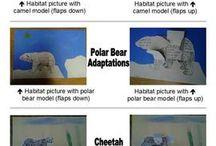 Animals / Adaptations / Habitats
