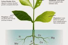 bitki element eksiklikleri