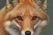 Animals.Foxes