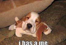 Too cute to resist...
