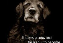 SENIOR DOGS ARE SPECIAL / We have a soft spot for senior dogs.  They are very special and should be treated with the utmost respect.  For this reason, we have a board dedicated entirely to these precious souls