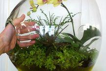 plantas / by gris prieto