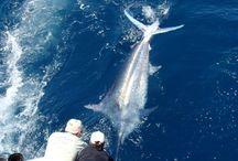 Fishing Panama / Best Blue Water Fishing World Wide
