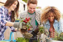 Plants, Flowers & Gardening