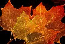 Warm glass leaf