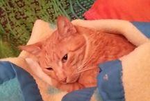 Lu - best cat ever