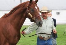 sonador horse