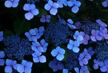 Blues / Beautiful Blues