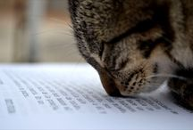 books, cats, coffee and rain