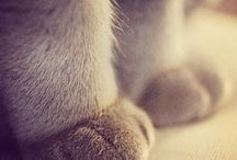 paws and claws
