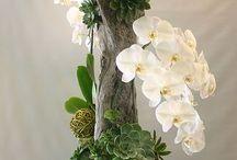 floralice