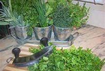Banho de ervas