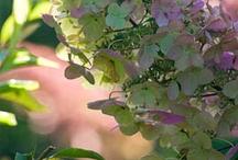 Vert clair RucheNum Jardin Augmenté