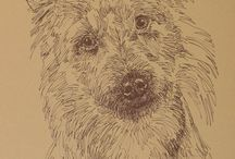 Australian terriers and other dog-related pics / Australian terriers art-pics