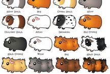 World of Cute Guinea Pigs