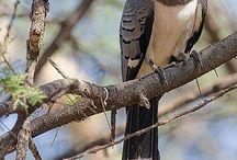 Vögel - Insekten / Singvögel-Greifvögel-Insekten