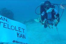 Diving Morotai