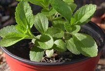 Jardín -> Remedios naturales