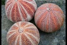 Sea Shells & Such