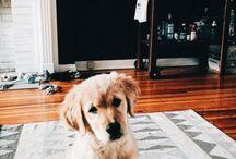 Doggo's