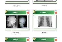 Bones Lesson