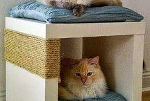 projetos gatos caes