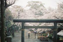 Japan / by Schorlemaedchen
