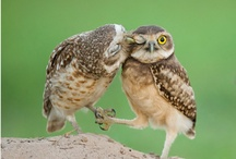 Owls / I don't like owls! Where did you get such an idea?! / by Chelci Humm