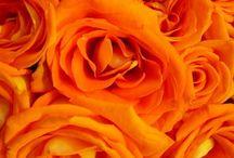 Orange, Orange, Orange / by Caitlin Elizabeth