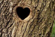 Love is everywhere♡
