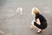 breed love ♥ italian greyhound