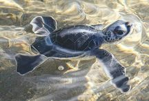 Żółwie tempo
