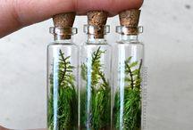 Ferns Terrariums Inspiration