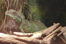 Reptielen / In deze serie zie je onze reptielen die in het grote verblijf wonen