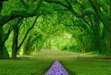 Colour: Green