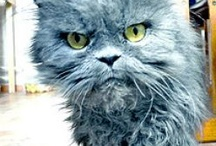 Cats! ;-)