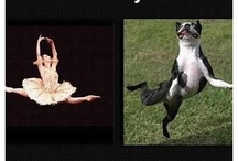 Funny ballet stuff(that only dancers understand )