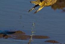 Birds of Tswalu