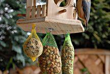 madár ház-etető