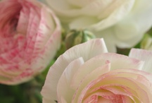 Flowers I love / by Ros Hollaardt