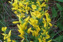 Flora / Flora, plant science...